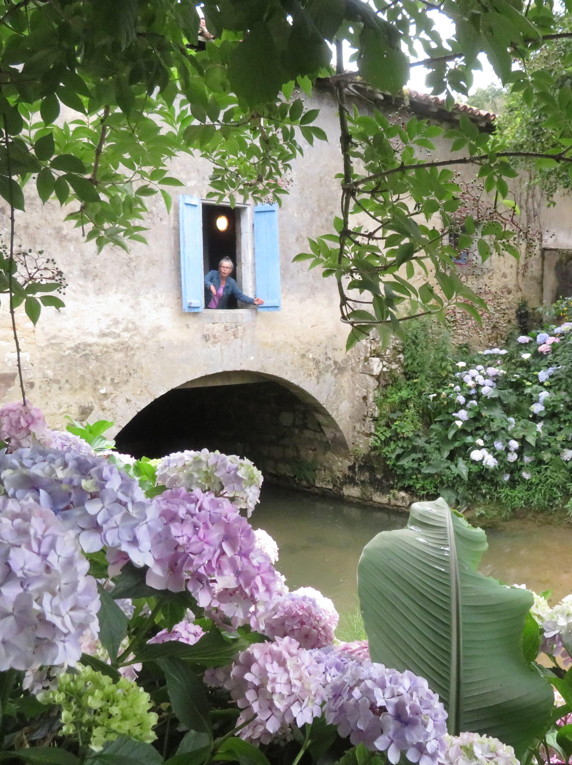 arrière moulin hortensias